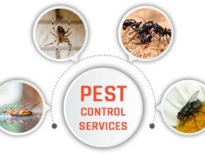 pest control services in Faridabad, Delhi